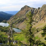 The mountain goats of Twin Lakes Basin, in the Elkhorn Mountains, are not particularly fearful of humans.