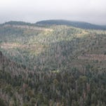 Scientists are predicting  the disappearance of the Southwest's pine-juniper forests.