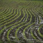 Corn plants grow in a wet farm field in 2013 near Prairie City, Ia.
