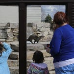 Alexis Kluck, 5, watches the ring-tailed lemurs during the opening day for the Wisconsin Rapids Municipal Zoo, Monday, May 30, 2016.
