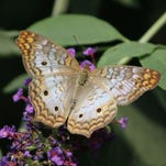 Panhandle Butterfly House inspires amateur photographer
