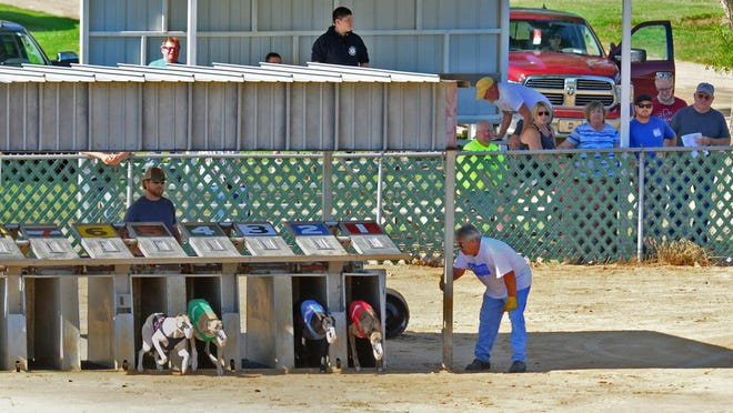The greyhounds take off as the gate opens in the seventh race the Ben Stout Memorial Stake  in the finals at the spring nationals meet at the National Greyhound Association outside of Abilene.