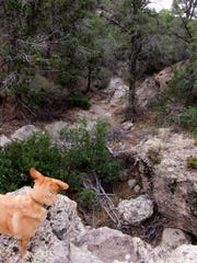 My dog looks down a dry fall and down the canyon we hiked to find Pine Park Canyon in the Dixie National Forest.