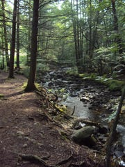 Hickory Run's two-mile Shades of Death Trail is receives moderate traffic.