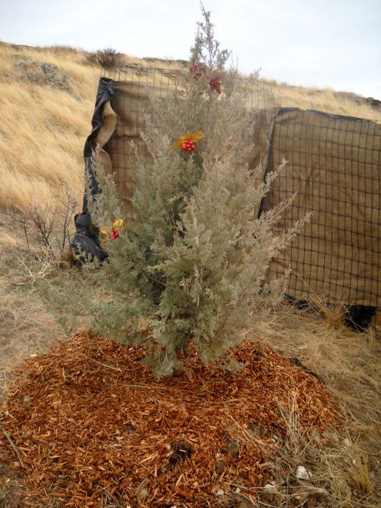 636492201833260349-Noel-Tree-2-4.jpg