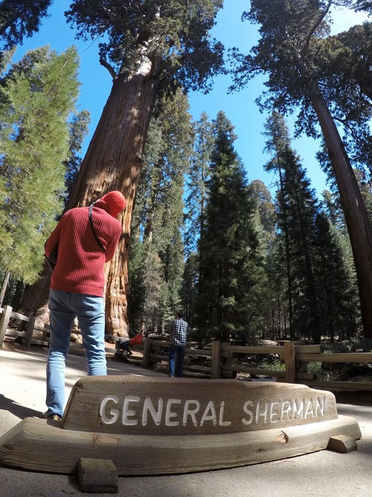 Sequoia National Park and Memorial Day