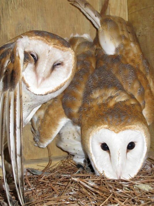 Nature Center owls