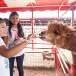 Rides, music, events packed into Collier County Fair