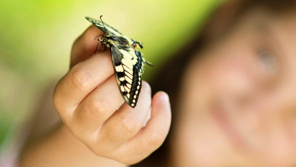 This weekend, the Calusa Nature Center in Fort Myers celebrates the grand re-opening of its Butterfly Conservatory.