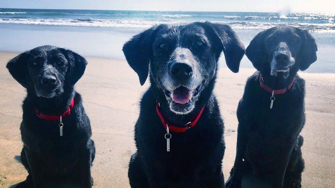 These dogs were surrendered due to financial hardship during the COVID-19 pandemic but ended up with a new owner in California.