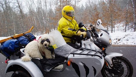 """This photo provided by Eric Ristau shows Mooloo a Standard Poodle riding with Rhonda Reynolds in a 2005 Triumph Tiger motorcycle in Spooner, Wash. These dogs are set apart by speed instead of breed and like to fly like the wind in a blimp-shaped bucket attached to the side of a motorcycle. They are highway sidekicks and the stars of """"Sit Stay Ride: The Story of America's Sidecar Dogs,"""" by filmmakers Eric, 38, and Geneva, 29, Ristau of Missoula, Montana."""