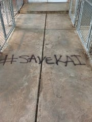 """The phrase """"#SaveKai"""" was spray painted on Antietam Humane Society Monday evening, the shelter said. It is being investigated as vandalism."""