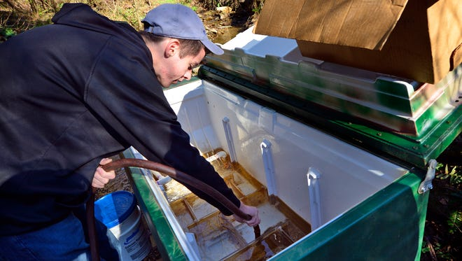 Jonathan McGee, 17 of Stewartstown, siphons sediment out of the streamside incubator box he built for an Eagle Scout Project, under the watchful eye of Maurice Chioda, environmental chairman for the Muddy Creek Trout Unlimited Chapter 575, Friday Nov. 13, 2015.