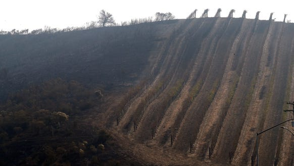 A view of a scorched vineyard in Sonoma, Calif., Oct.