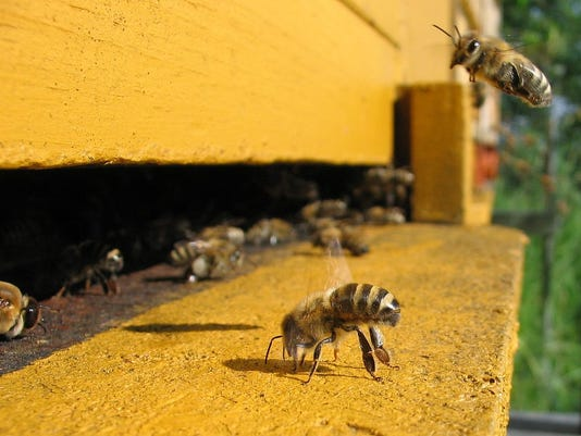 635665288832679514-Colony-Collapse-Disorder
