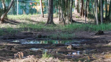 Toxic sludge: Florida DEP supports Fort Myers arsenic site clean-up, still requires testing