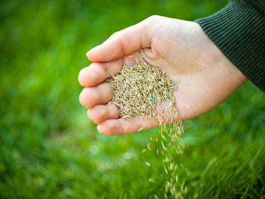 Late August through September is the best time to install a new lawn, overseed or fertilize existing lawn.