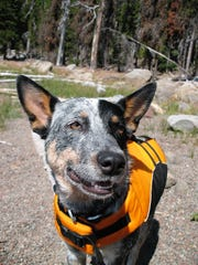 Patrick Kruse's dog, Mavis, wears a Ruffwear K9 Float Coat at Elk Lake in the Deschutes National Forest about four years ago.