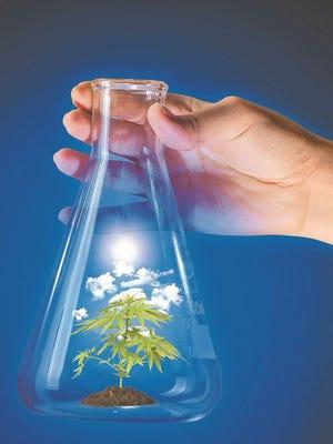 Marijuana in beaker