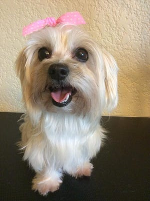 Barbie shows off her new hairstyle by Afterglo Dog Grooming.