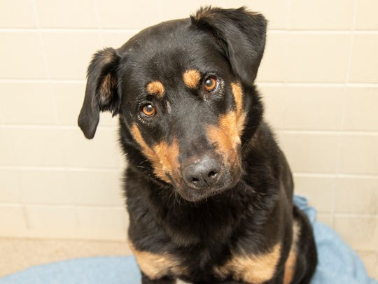Rosie is available for adoption at the Sunnyslope Campus,