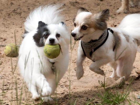 Pensacola Dog Parks