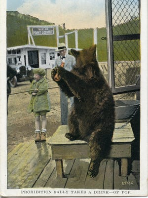 """Sally the Bear at Point Lookout. Postcard image courtesy of Mary and Joseph Standaert, authors of """"Swannanoa Valley."""
