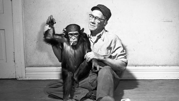Rosie the coquettish chimp loves to pose in glasses,