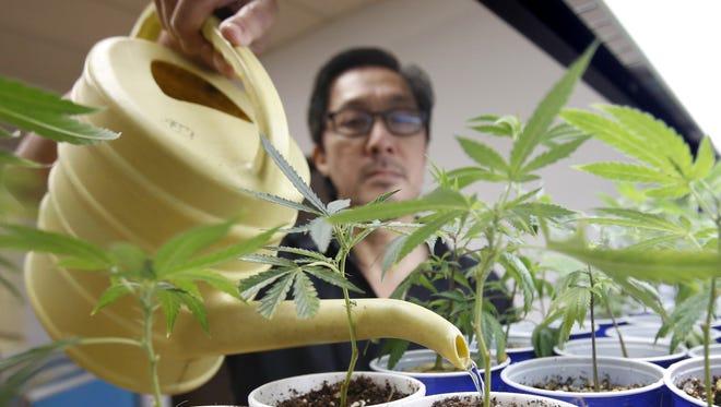 2015 photo taken at a medical marijuana dispensary in Sacramento, Ca.