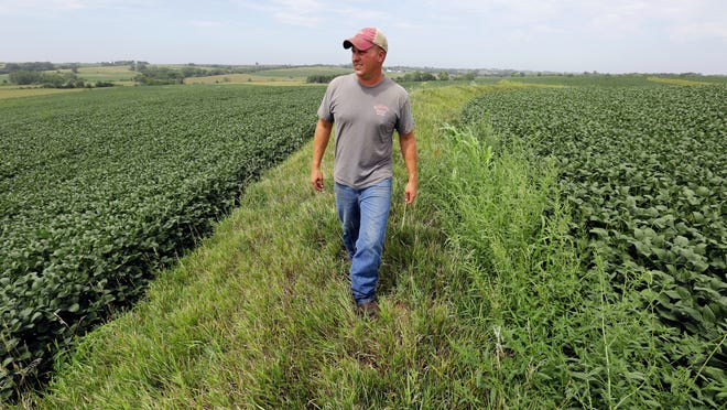 Justin Dammann walks a terrace between soybean fields on his Page County farmland. The Dammann family continues to invest in terracing of their fields to stop runoff and reduce soil erosion.