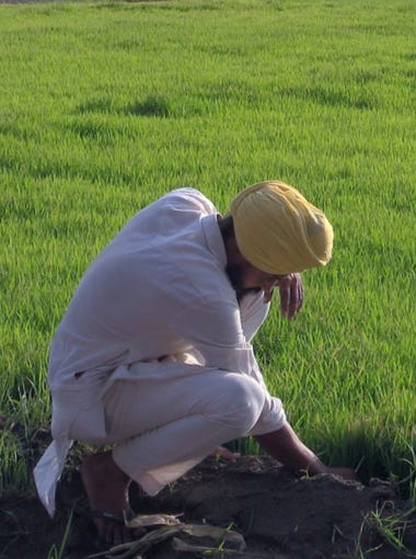 Farmer Kulwinder Singh Sanghera checks on his rice nursery ahead of the planting season in the northern Indian state of Punjab. Each year, flooded rice paddies cover vast areas of Punjab, and its groundwater levels have been declining.