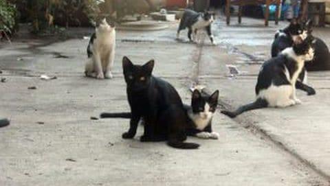 Some of Antonio Garcia's cat companions.