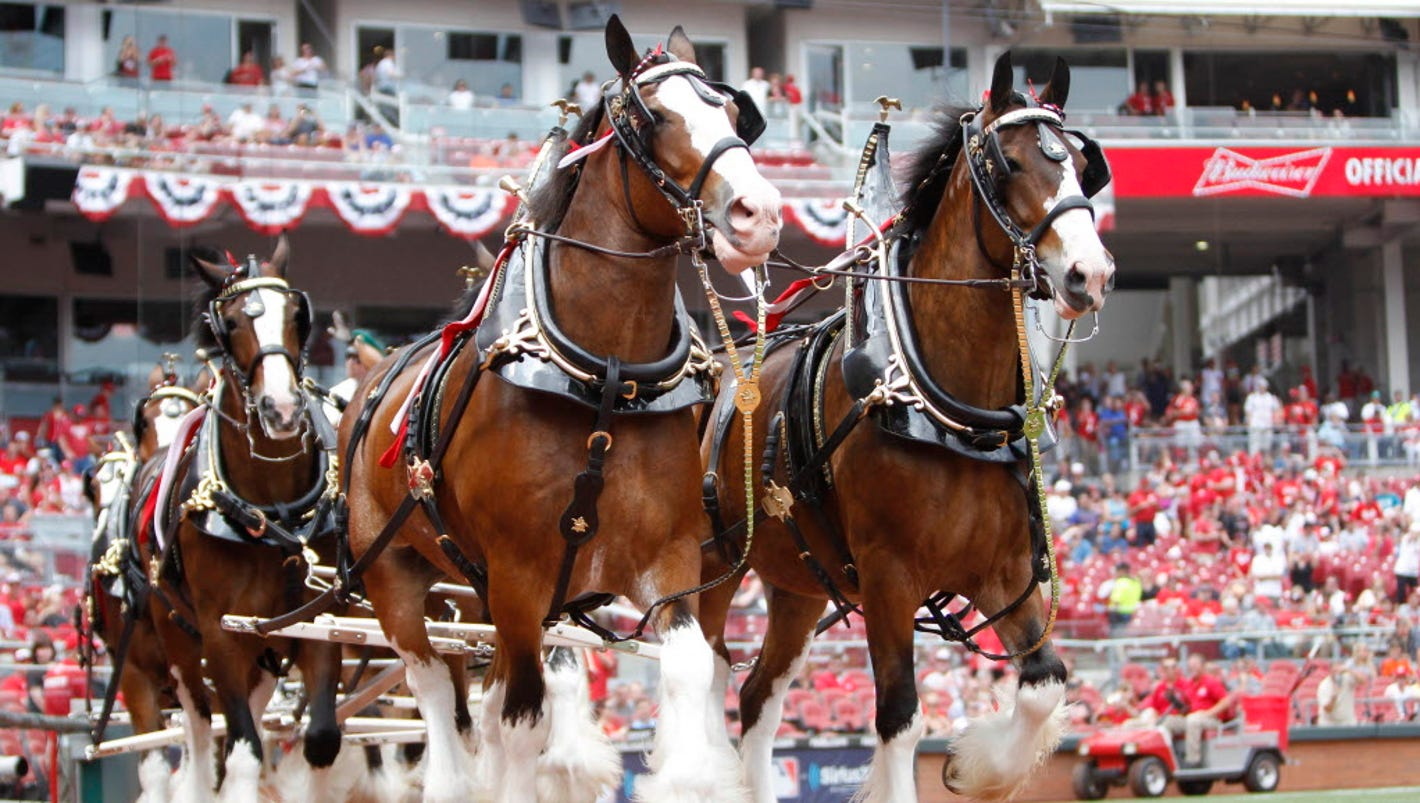 Super bowl 2018 budweisers clydesdales get special online ad aloadofball Images