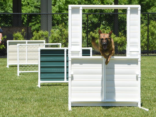 Police dogs complete agility training at the new K-9