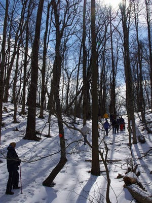 The group walks among the trees on a winter day.