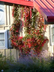 A creeping vine adds a burst of fall color to this Ruidoso home.