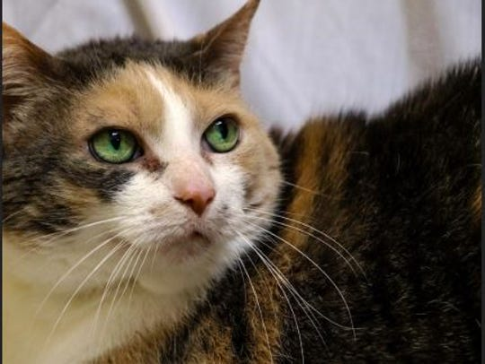 Maggie is 12 years, 5 months old and is at the Rochester Hills center.
