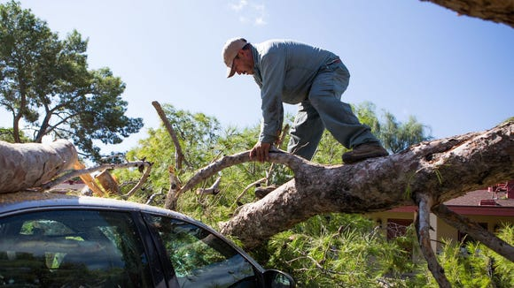 Landscaper Edgar Granados of the Thunderbird School of Global Management tries to dig a car out from under a downed tree after the recent storm near 51st Avenue and Greenway Road on Saturday, September 27 in Phoenix.
