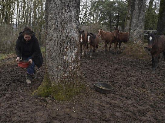 Rescued Mustangs (2)