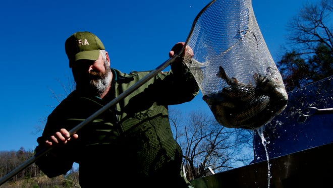 A TWRA worker hands a net of trout to Gatlinburg Trout Facility Manager Ryan Hintz to stock trout into the river at Herbert Holt Park in Gatlinburg, Tenn., on Friday, March 3, 2017. Tennessee Wildlife Resources Agency and the city of Gatlinburg stocked 3,000 rainbow trout in the streams in Gatlinburg to replenish the population and for the upcoming summer fishing season.