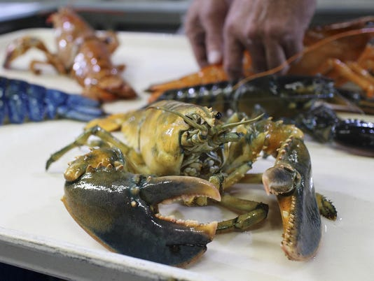 Yellow Lobster Aquarium (2)