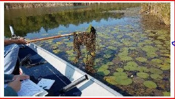 Taken from the report presented to the Land Conservation Committee, this photo shows the harvesting of aquatic plants this past summer.