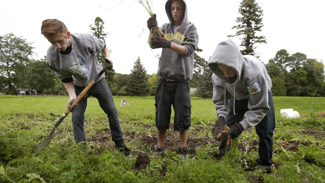 Appleton Central High School's Taylor Rock, from left, Liam Blumers and Michael Bourdelais harvest carrots while volunteering last week at Riverview Gardens in Appleton.