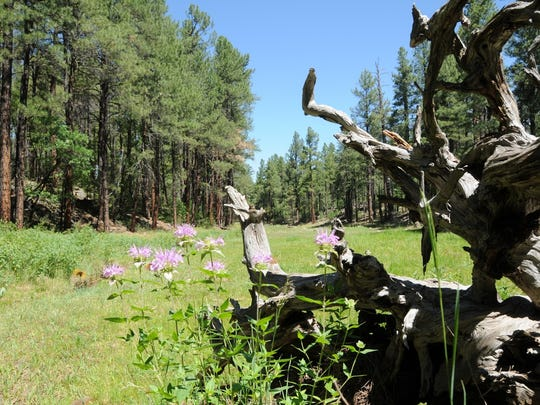 Wildflowers are plentiful in summer along the easy Springs Trail in Pinetop.