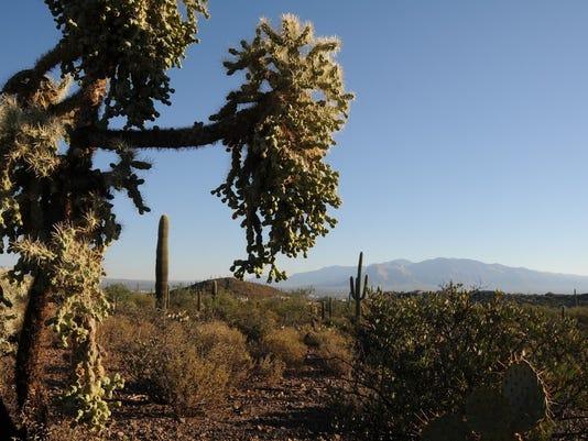 Sweetwater Preserve, Tucson