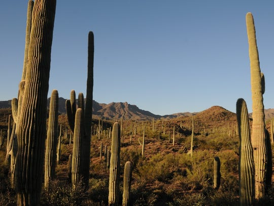 Hikers on the Saguaro Vista Trail at Sweetwater Preserve have a view of the Tucson Mountains.