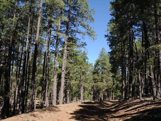 The hike up Woody Mountain near Flagstaff follows an
