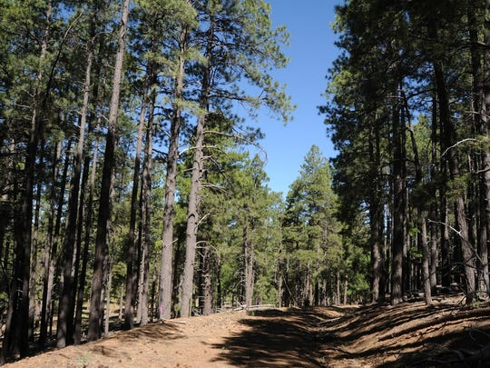 The hike up Woody Mountain near Flagstaff follows an