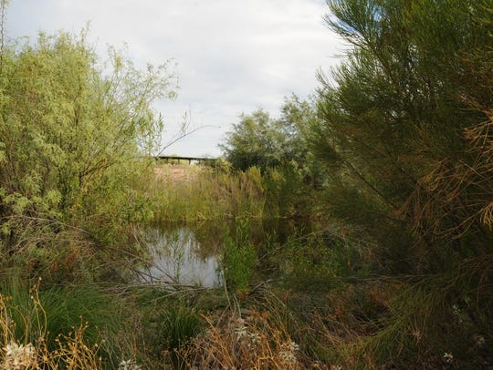 Look for herons, egrets and ducks in the secluded coves