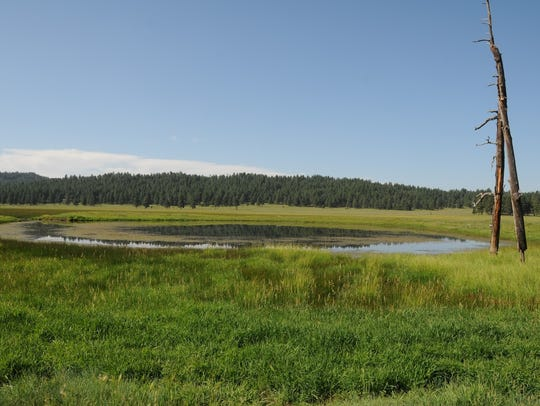 A favorite spot for waterfowl at Sunflower Flat Wildlife